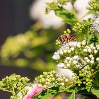 Widespread Declines in UK's Pollinators: Study