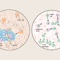 Infographic: CAR-T Cells in Solid Versus Liquid Cancers