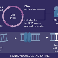 Infographic: Functional Characterization of Microproteins