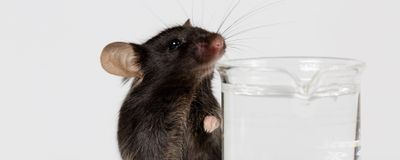 Thirst and Drinking Spark Widespread Activity in the Mouse Brain