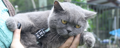 Image of the Day: Cat Trackers