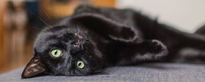 Cats Perk Up at the Sound of Their Own Names