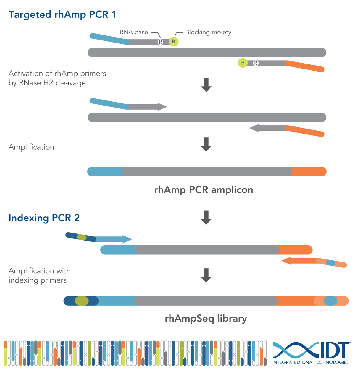 IDT lowers genomic barriers with powerful rhAmpSeq&trade