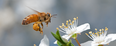 Pesticide Marketed as Safe for Bees Harms Them in Study