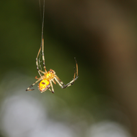 Spider's Orange Colors Both Lure Prey and Frighten Predators