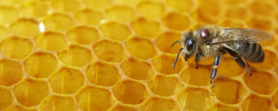 Artificial Intelligence Could Help Monitor Bee Health