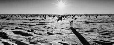 Antarctic Emperor Penguin Colony Faces Collapse