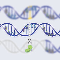 Infographic: AI Predicts Post-CRISPR Repairs