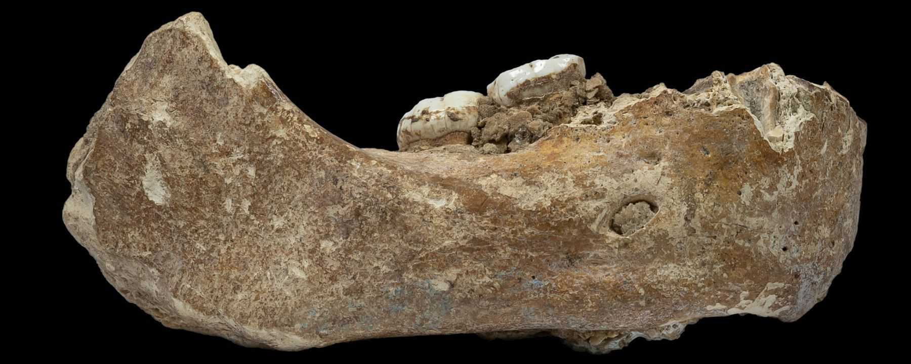 Denisovan Fossil Identified in Tibetan Cave
