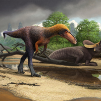 Image of the Day: New Tyrannosauroid