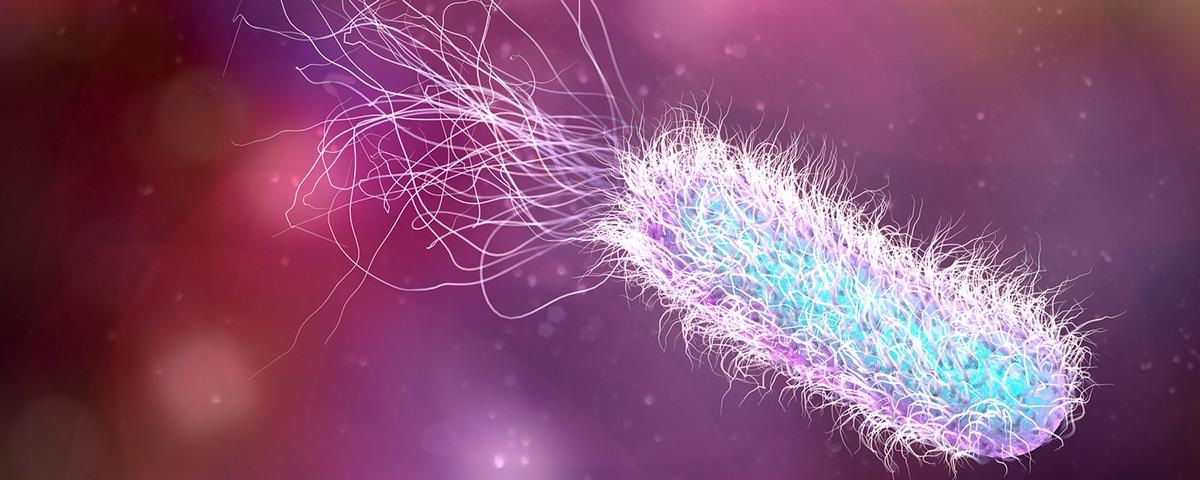 How Bacteria