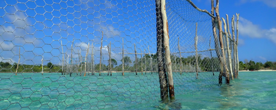 Image of the Day: Fish Fences