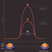 Infographic: Quantum Explanations for Biological Phenomena