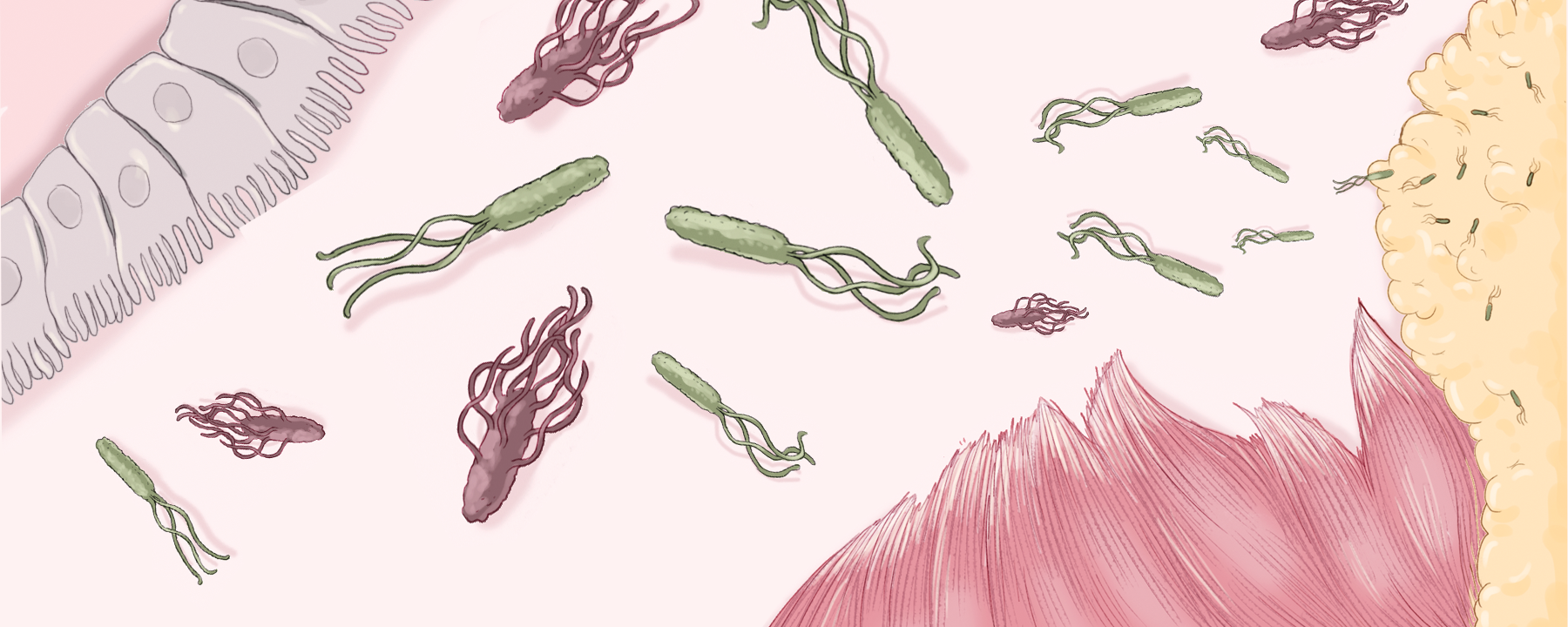 Infographic: Immunity Isn't the Body's Only Defense System