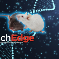Mouse Models for Disease Research