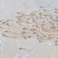 Image of the Day: Fossilized Motion