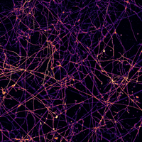 Image of the Day: Network Demand