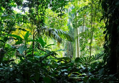 Study: Plant Species Lost at Alarming Rate