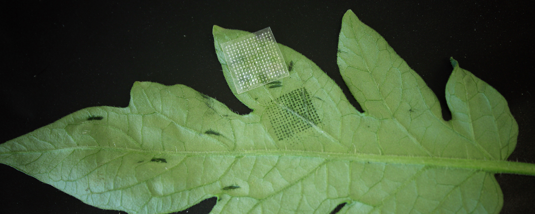 Image of the Day: Holey Leaves