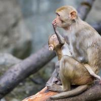 Infant Monkeys Died in Accidental Poisoning at UC Davis Lab