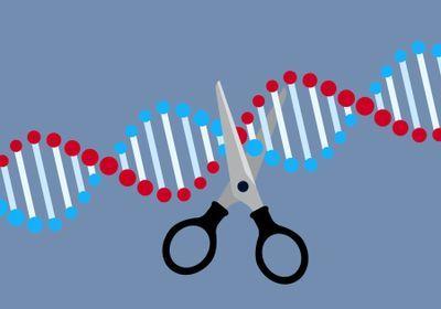 USPTO Restarts CRISPR Patent Dispute Between Broad and UC