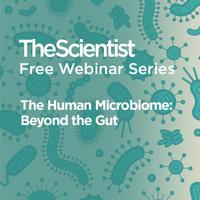 The Human Microbiome: Beyond the Gut