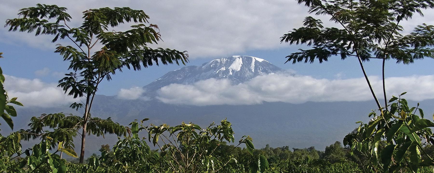 Agriculture and Climate Shape Biodiversity on Mount Kilimanjaro