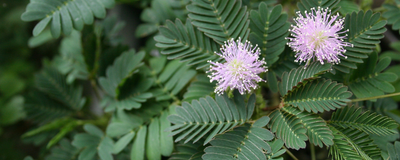 Botanists Say Plants Are Not Conscious