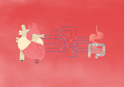 The Gut Microbiome Can Be a Boon or a Bane for Cardiovascular Health