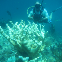 Coral Deaths Spurred by Pollutants From Land
