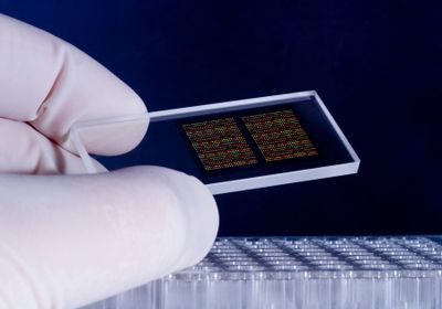 Accuracy of Genotyping Chips Called into Question