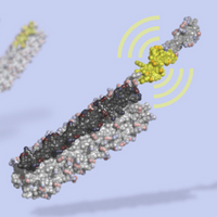 Designer Protein Acts as a Switch for Cellular Circuitry