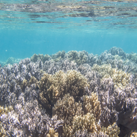 Guam's Coral Reefs Ravaged by Warming Oceans
