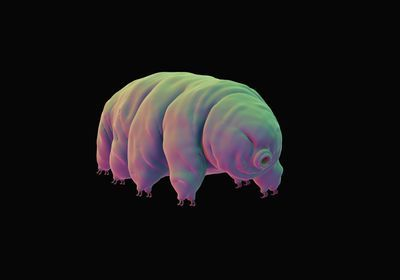 Tardigrades May Have Made it to the Moon