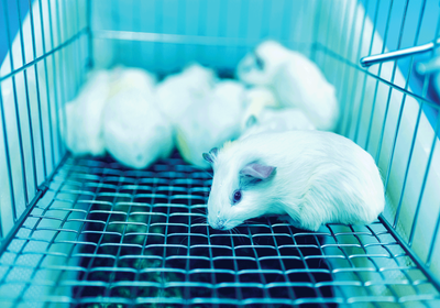 Fixing the Flaws in Animal Research