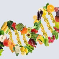 Personalized Nutrition Companies' Claims Overhyped: Scientists