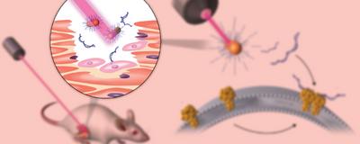 Infographic: Optogenetics Without Genetic Engineering