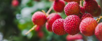 Mysterious Illness Linked to Lychees Kills Children in India