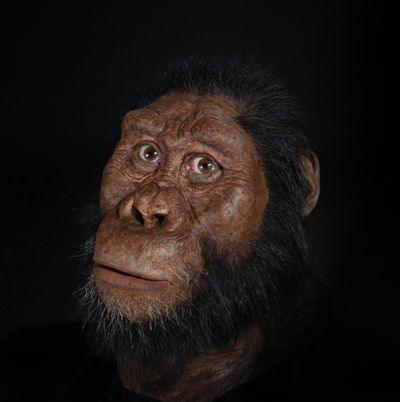 Face of the oldest direct human ancestor revealed