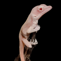 Image of the Day: Gene-Edited Reptiles