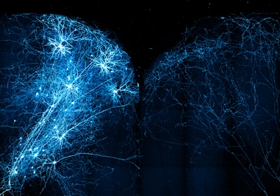 Image of the Day: Brain Map