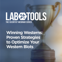 Winning Westerns: Proven Strategies to Optimize Your Western Blots