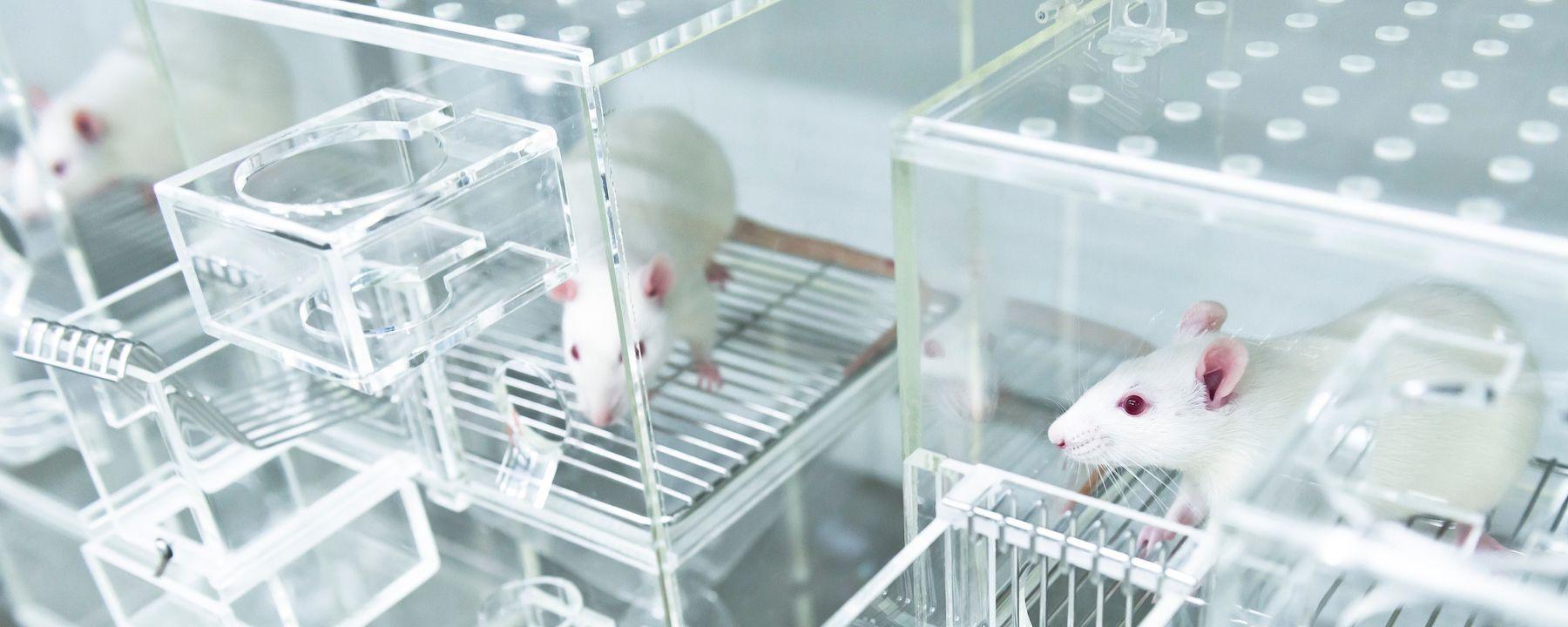 EPA Aims to Drastically Reduce Animal Testing