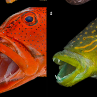Image of the Day: Fish that Eat Fish