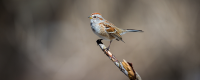North America Has 3 Billion Fewer Birds Than it Did in 1970