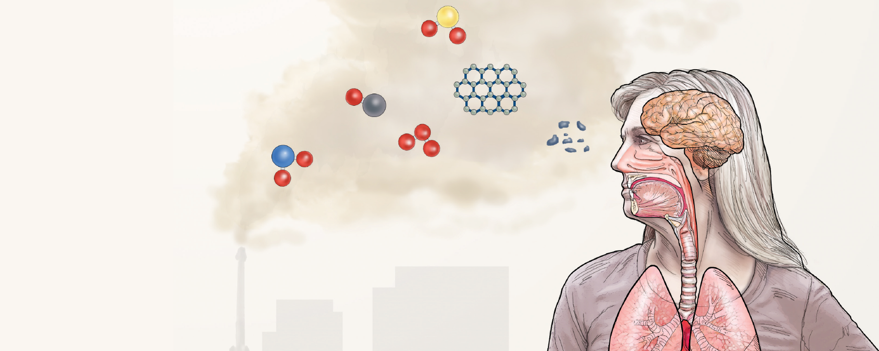 Infographic: How Air Pollution Could Affect the Brain