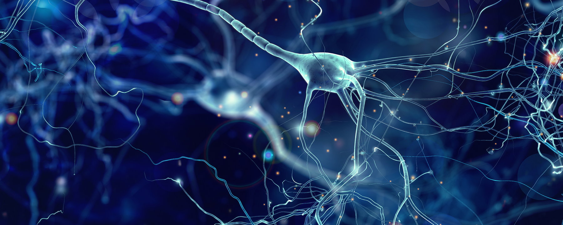 Genetic Risk for Alzheimer's Disease Linked to Highly Active Brains