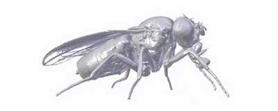 Image of the Day: Fly Reconstruction