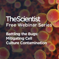 Battling the Bugs: Mitigating Cell Culture Contamination