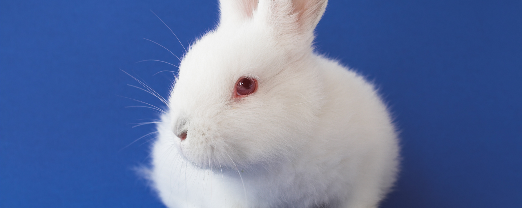 Rabbit Study May Hint at Origin of Female Orgasm in Humans
